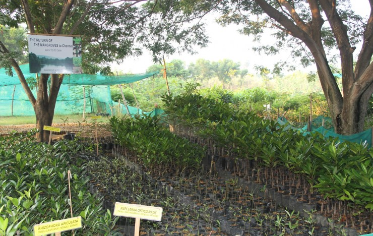 Afforestation and Mangrove Restoration